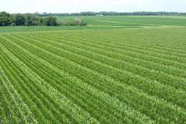تمرکز بر محصولات دیم برای کاهش فرسایش خاک در اولویت است