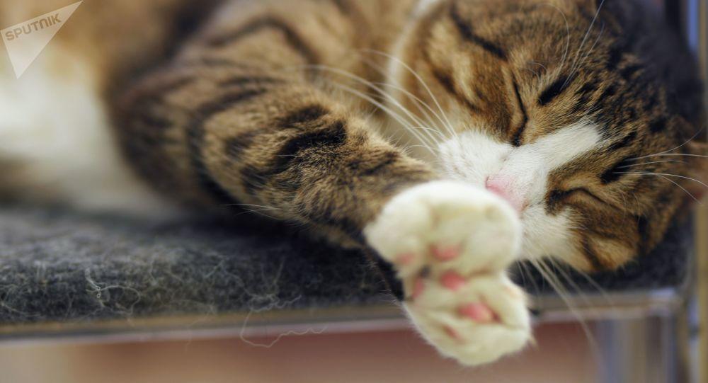 واکسن ضد آلرژی گربه ساخته شد