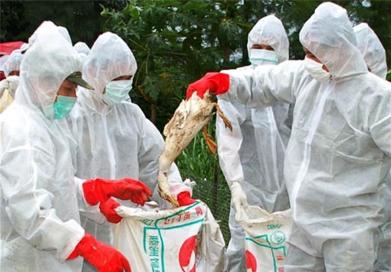 آنفلوانزای مرغی این بار در جنوب چین قربانی گرفت