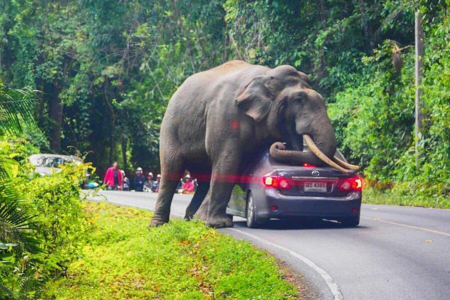 عکس روز: فیلی که ماشین را له می نماید