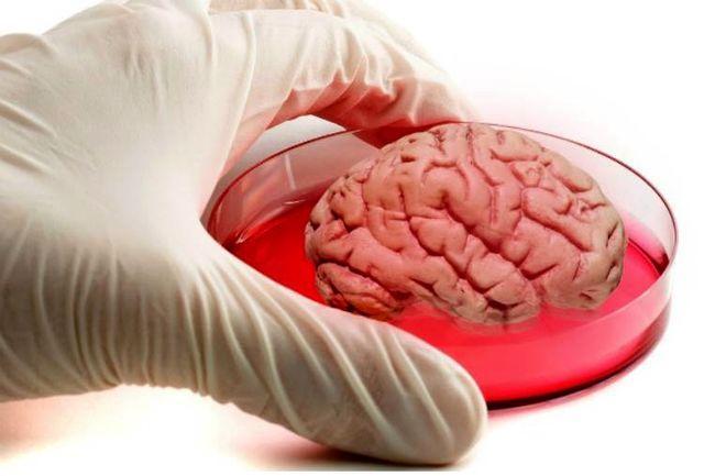 مدرسه پاییزی مغز و شناخت از 25 آبان برگزار می شود