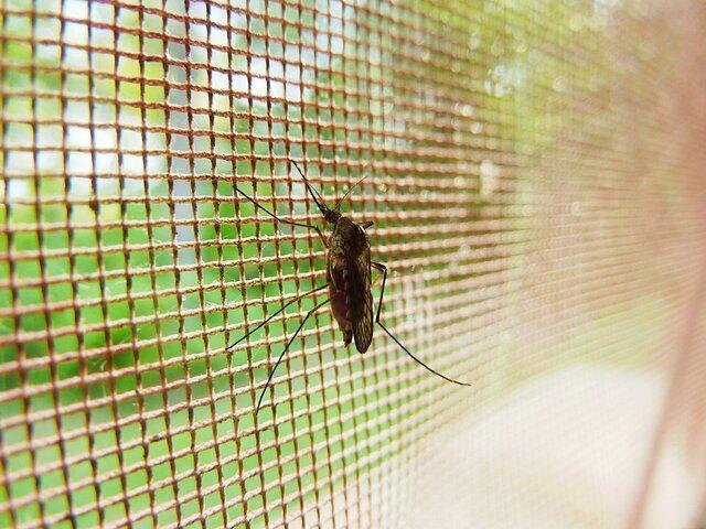 پشه ها سموم را با پای خود احساس می کنند!