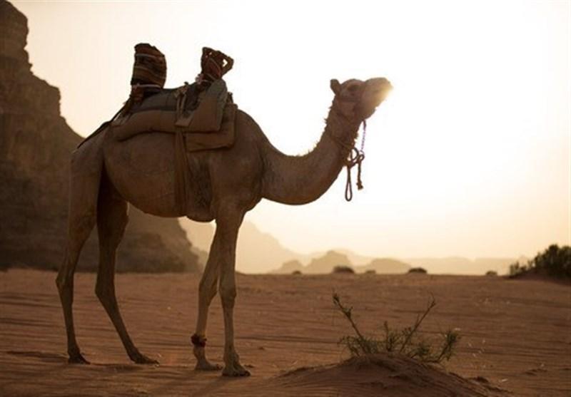 نگاهی به درایت مراکش برای ورود به بازارهای گردشگری