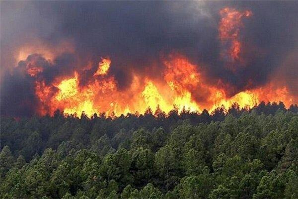 توسعه ردیابی برای شناسایی آتش سوزی جنگل ها