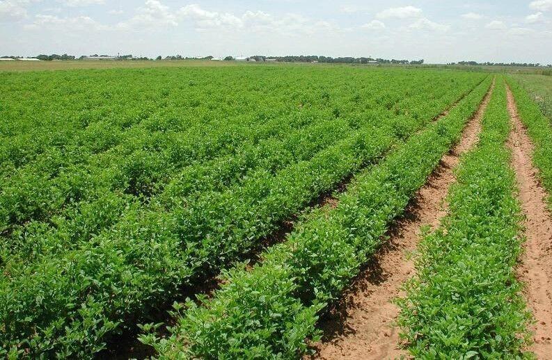 خبرنگاران تولیدات بخش کشاورزی خوزستان در افق 1410به 30میلیون تن خواهد رسید