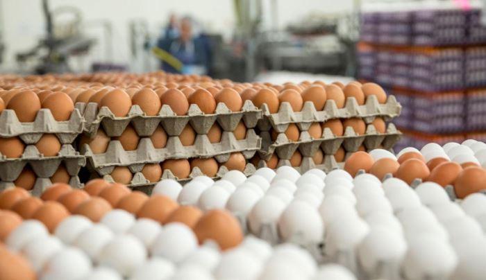 قیمت تخم مرغ بالاخره چقدر است؟